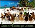 Hoja bloque Isla de Vanuatu 2013 (**). Perros